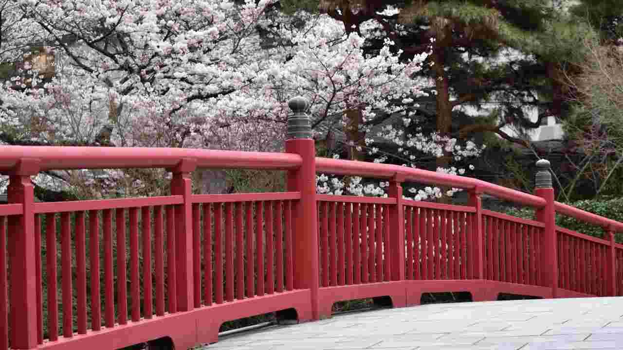 有馬温泉の桜風景