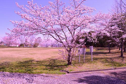 桜のRAW現像