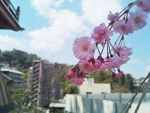 桜の加工例
