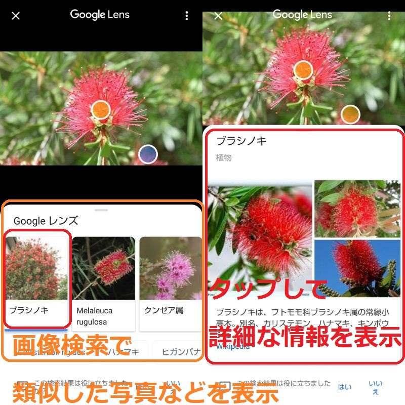 Googleレンズで花の写真を画像検索