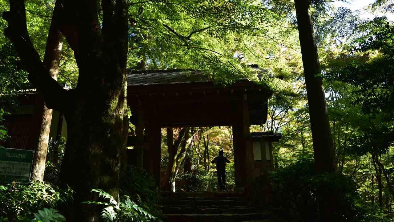 瑞宝寺公園の山門