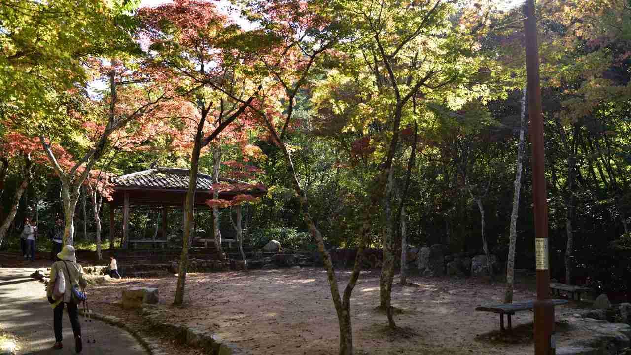 瑞宝寺公園の中央広場