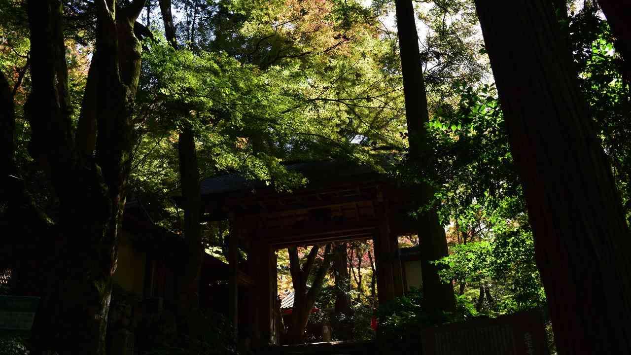 瑞宝寺公園山門の紅葉