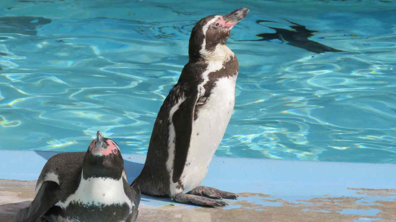 水浴びするペンギン