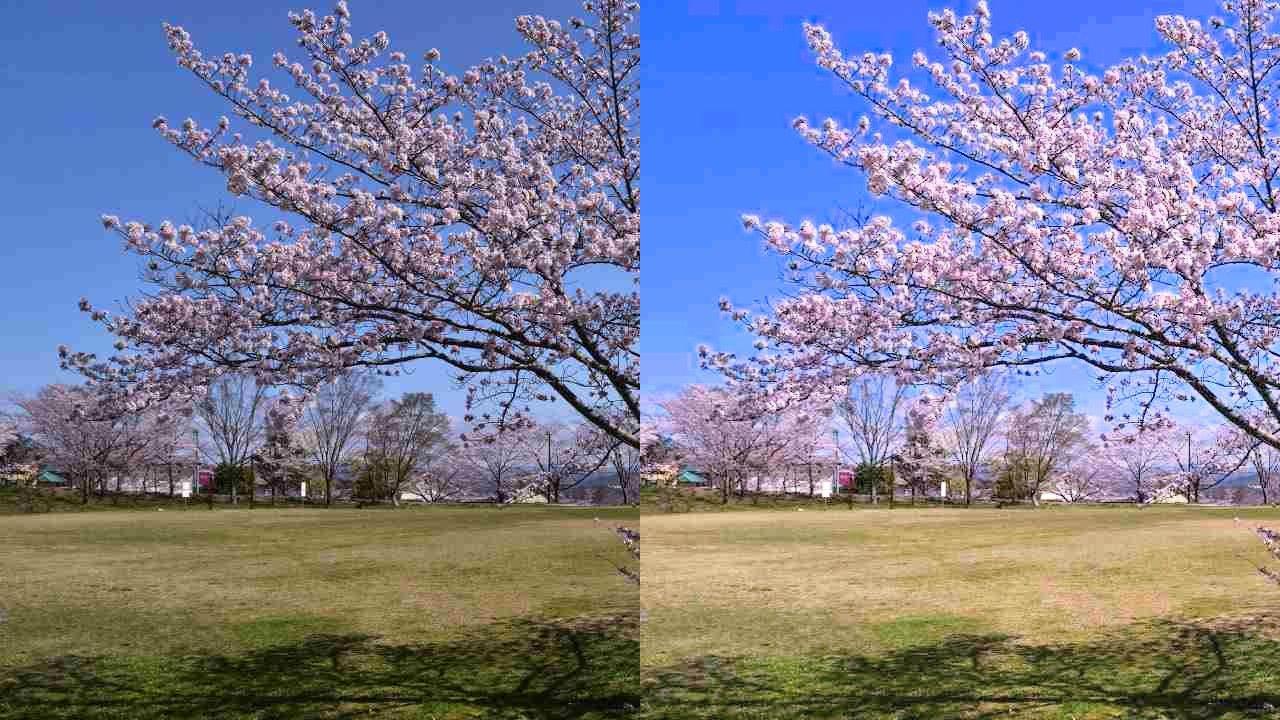 Googleフォトを使った桜の写真の加工例
