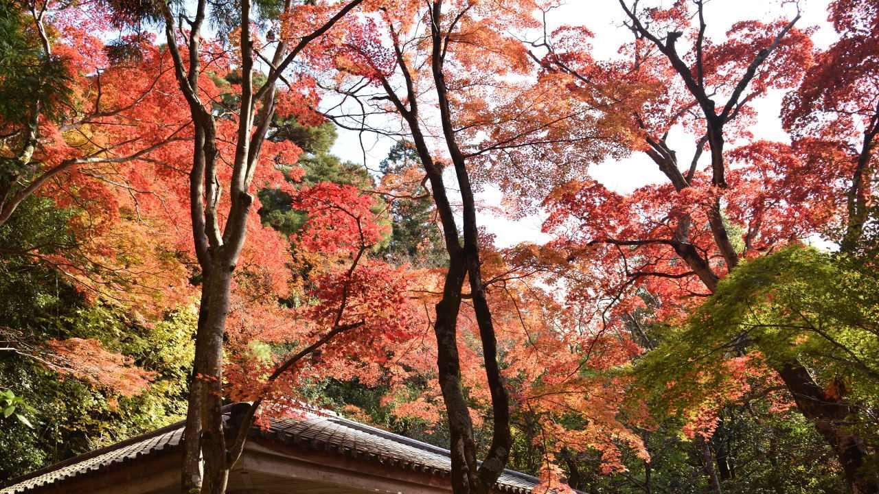 東屋付近の紅葉