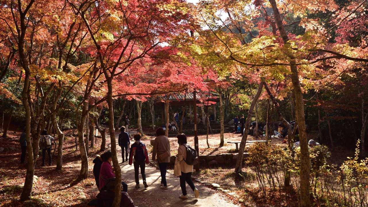 瑞宝寺公園の広場